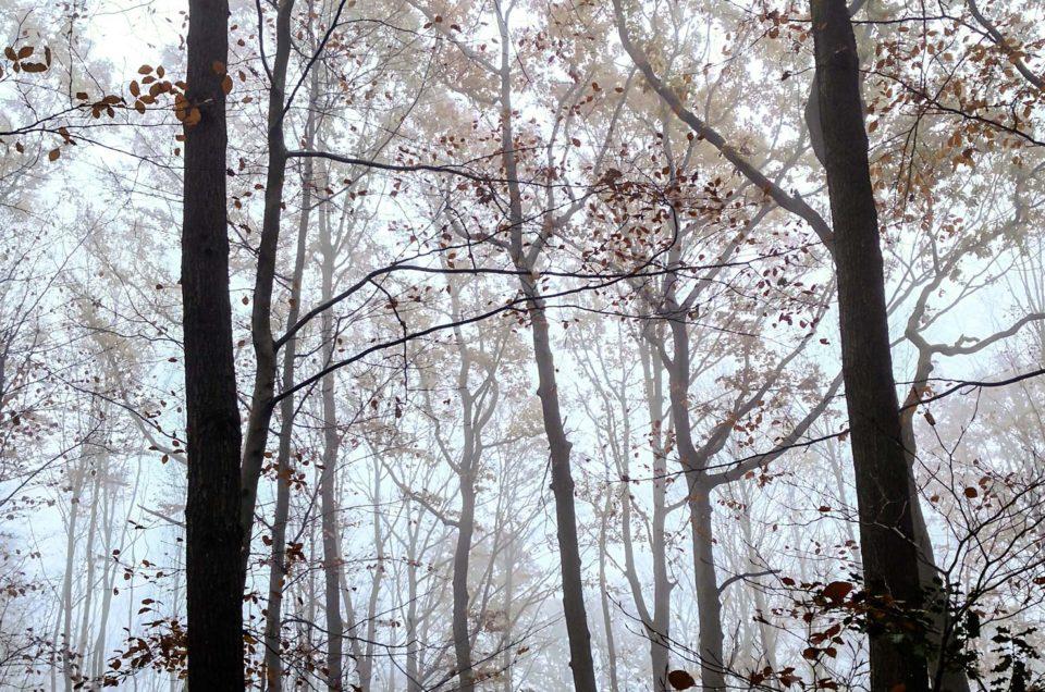 Plongée dans la brume